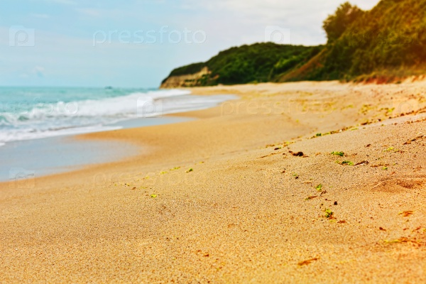 Водоросли на диком пляже