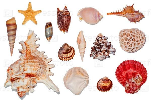 Морские раковины на белом фоне