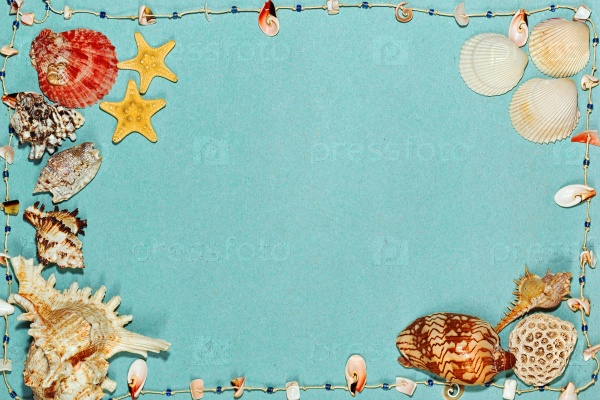 Морские раковины и звезды