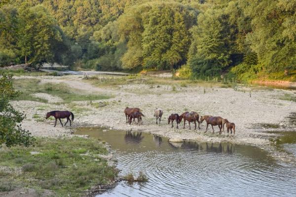 Лошади на реке