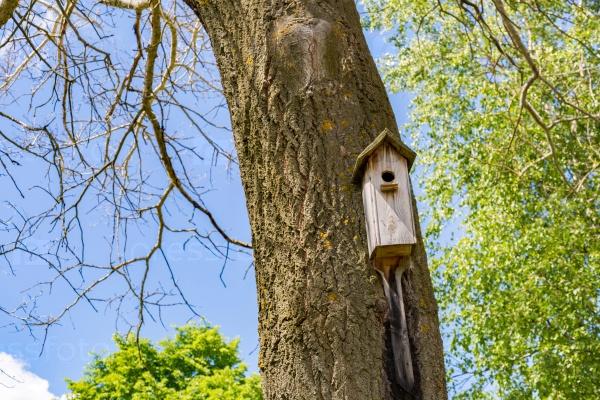 Дом для птиц в парке