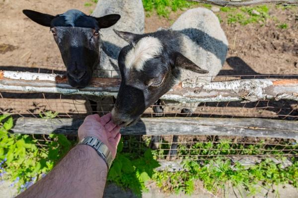 Будни в европейской ферме