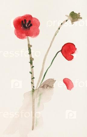 Эскиз красных цветов мака