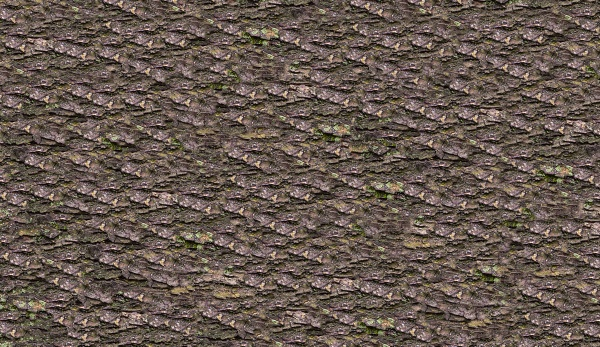 Фон древесной коры