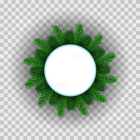 Зеленый круг веток пихты