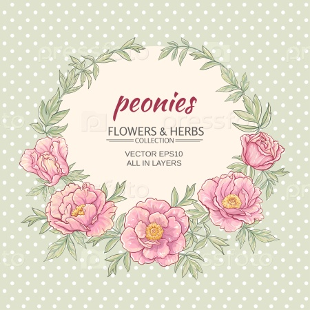 Рамка с розовыми пионами на цветном фоне