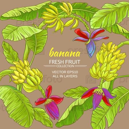 Растение банан
