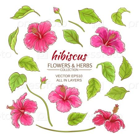 Цветы гибискуса на белом фоне