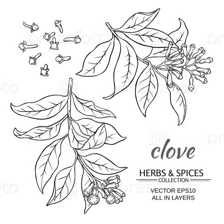 Гвоздика растение набор на белом фоне