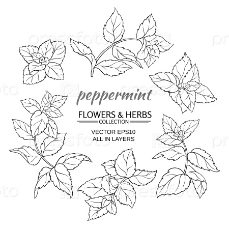 Мята растения набор на белом фоне