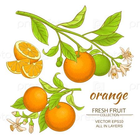 Ветви апельсина
