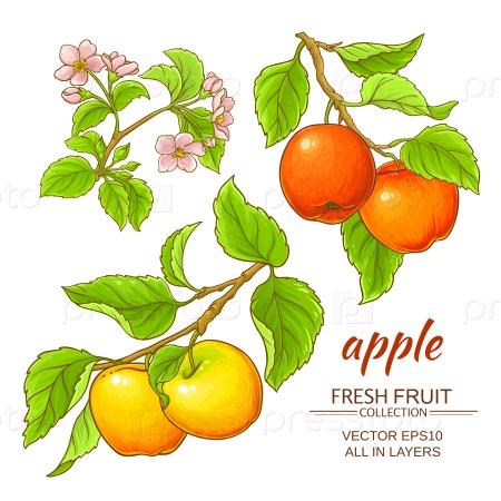 Ветви яблони на белом фоне