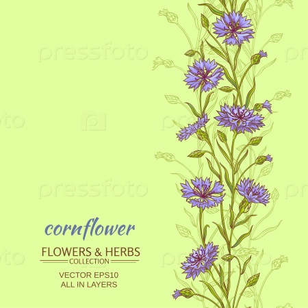 Василька цветы