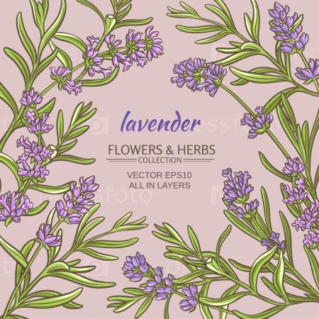 Цветы лаванды на цветном фоне