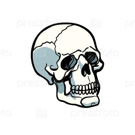 Человеческий череп на белом фоне