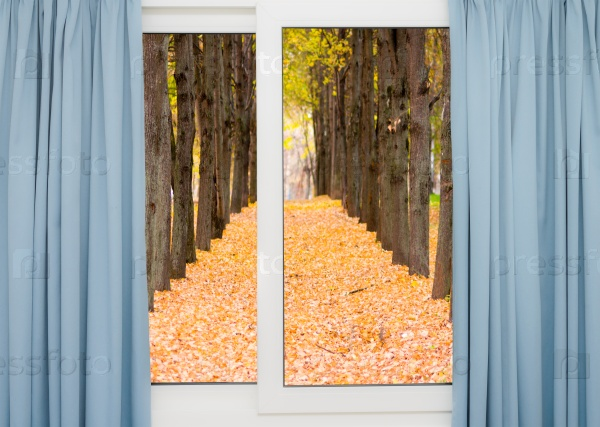 Осенний пейзаж за окном