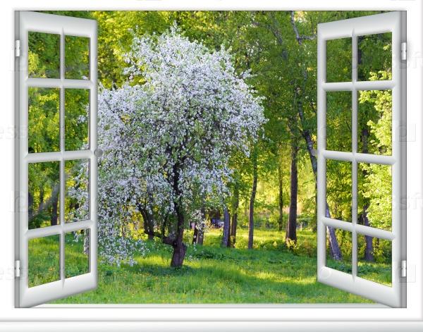 Весеннее цветение плодовых деревьев в солнечный день из окна дома