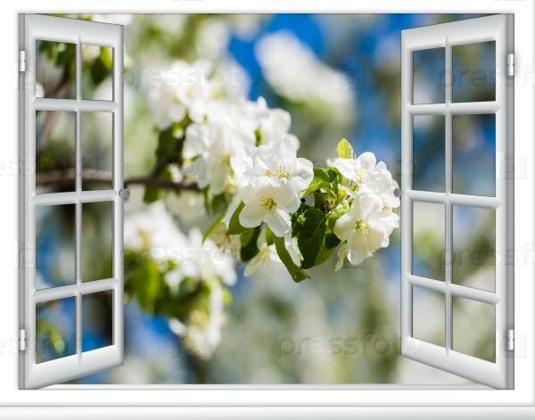 Весеннее цветение плодовых деревьев в солнечный день вид из окна дома