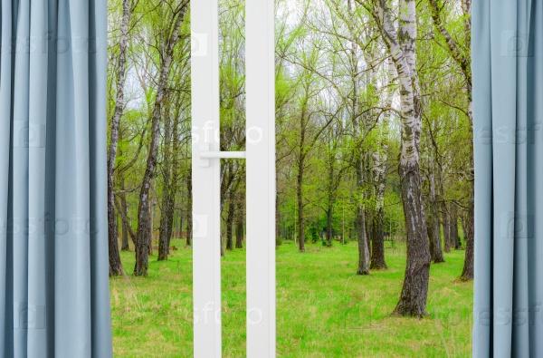 Лес из окна