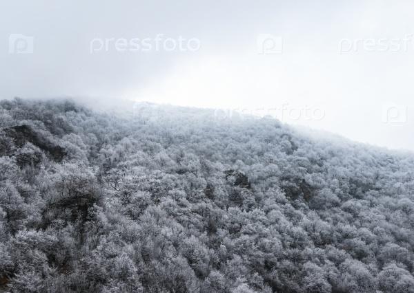 Вершина горы покрыты снегом и сосновым лесом в тумане
