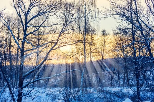 Солнце в лесу зимой