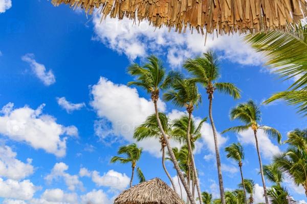 Пальмовый пляж и шезлонги