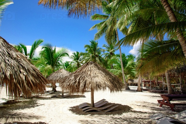 Пальмовый пляж и шезлонг