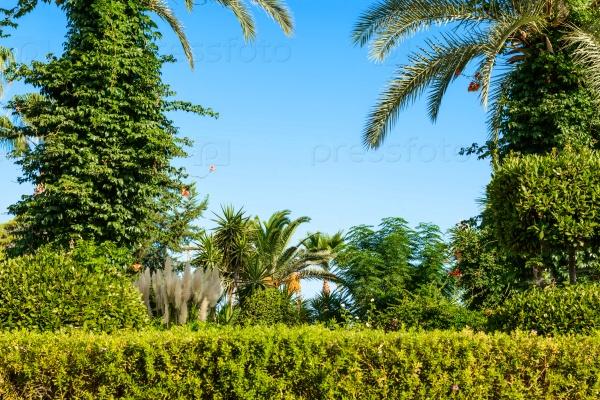 Пальмовый пейзаж