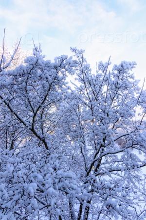 Деревья после ледяного дождя