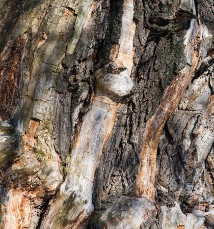 Фон корявое дерево