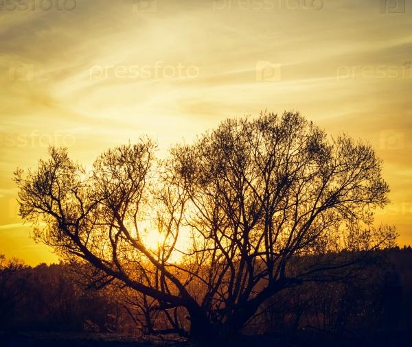 Солнце на дереве