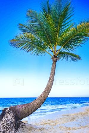 Тропический пляж с зеленым деревом