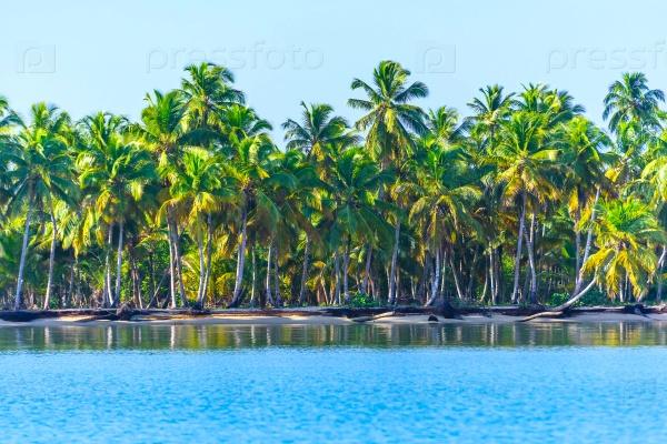 Побережье океана с деревьями