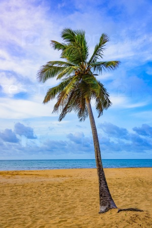 Палмы
