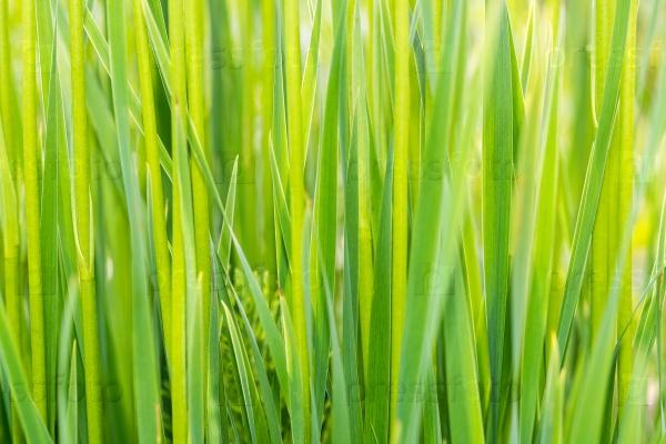 Трава фон