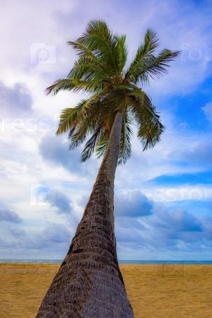 Красивый тропический пейзаж