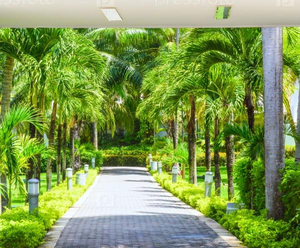 Дорожка с пальмами