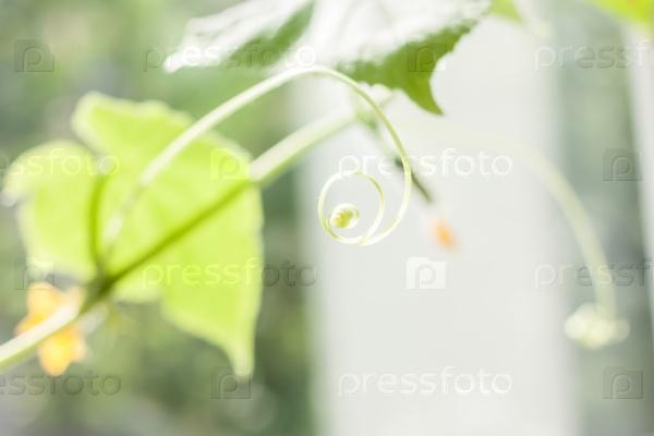 Размытый фон с зеленым огурцом