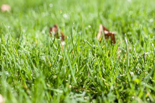 Зеленый фон травы