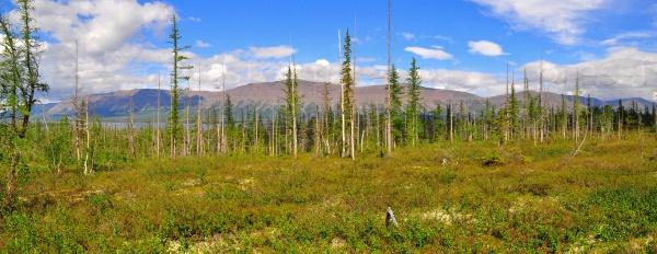 Панорама горных тундр на плато Путорана