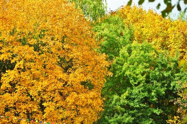 Красочные деревья осенью