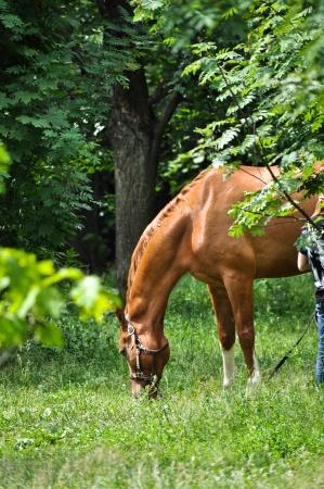 Лошадь в зеленом лесу