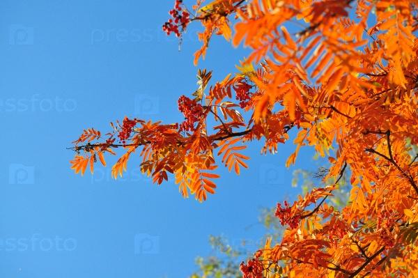 Время листопада - яркие листья на ветвях