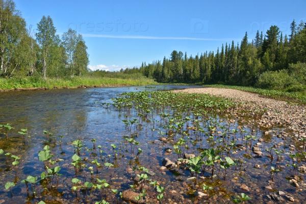 Таежная река на Северном Урале
