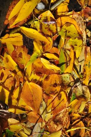 Фон из опавших осенних листьев