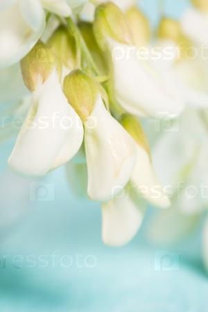 Белые нежные цветы