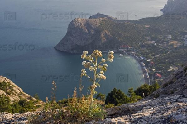Небольшой курортный городок на берегу Черного моря, Крым