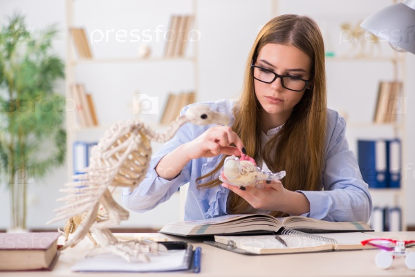 Student examining animal skeleton in classroom