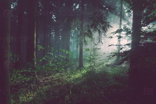 Лес России