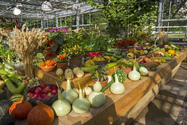 Осенняя выставка фруктов и овощей